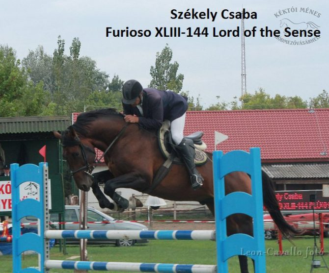 furioso-lovak-a-csongrad-megyei-dijugrato-donton-04