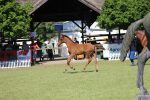 Furioso Fesztivál XXV. Állattenyésztési és Mezőgazda Napok