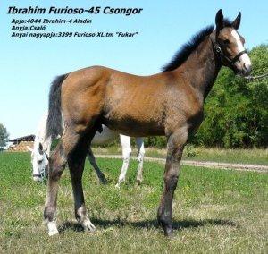 Ibrahim Furioso-45 Csongor