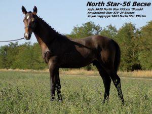 Nort Star-56 Becse