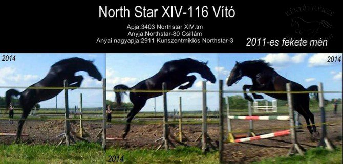 5621-north-star-xiv-116-vito-2