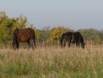 Egy őszi reggel a Kéktóban